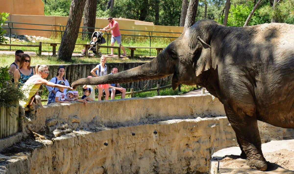 פיל בגן חניות La Palmyre בלה רושל, צרפת