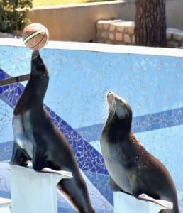 מופע אריות ים בגן החיות של לה רושל