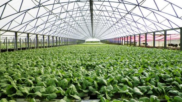 МИБ выдал очередной кредит на развитие сельскохозяйственной отрасли Румынии