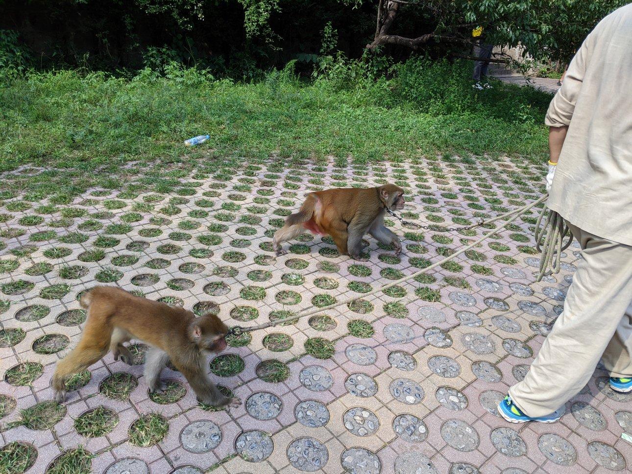 猕猴谷猴子