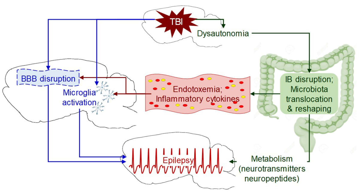 epilespsy and keto diet gut bacteria