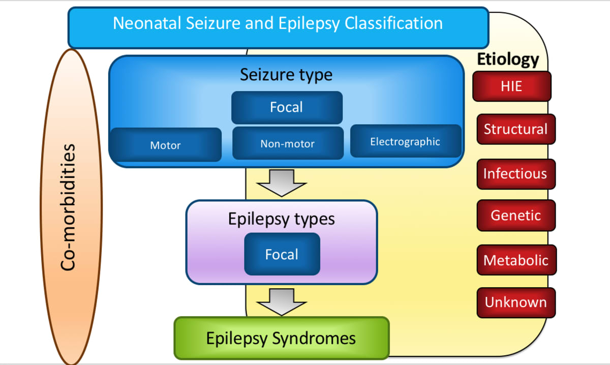 Neonatal Seizure Classification // International League