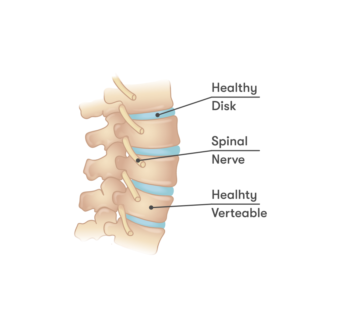 Healhty spine