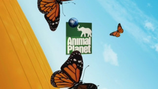 Animal Planet - Network Rebrand