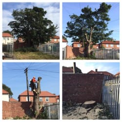 Tree removal in confined space. Had over 10 BT wires running through the canopy. The tree was dismantled with the lines in place, saving the customer over £1000 in paying BT for the lines to be dropped.