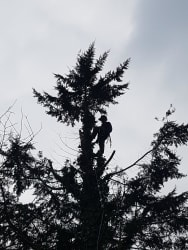 Tree Surgery / Arboriculture service
