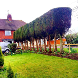 Main photos of Jack Cotterill Tree Services Limited