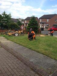 Main photos of First Class Tree Care Ltd
