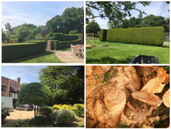 Hedges and shrubs trimmed and tidied - garden maintenance
