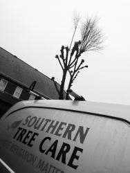 SOUTHERN TREE CARE LIMITED Logo