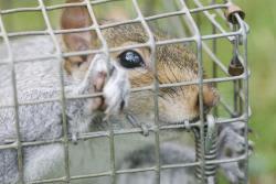 North Devon Wildlife Management Logo