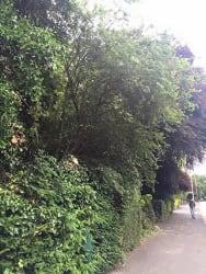 Main photos of CLARKE'S TREES
