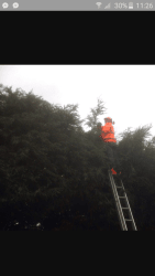 Trimming a large hedge