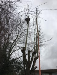 Main photos of ALL COUNTIES TREE CARE