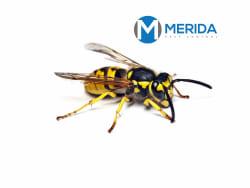 Main photos of MERIDA PEST CONTROL