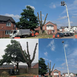 Pollarding the massive popular tree over a power station with the help of the 100ft mewp.