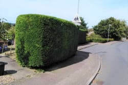 Hedge cutting with Grounds & Gardens. All your garden needs. Based in Bungay Suffolk
