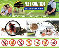 Cover photos of Control Your Pest Limited