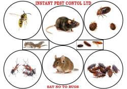 Main photos of Instant Pest Control