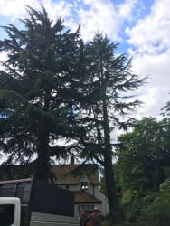 Main photos of High Crown Tree Surgeons