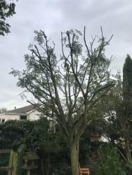 Main photos of Woodland Tree & Landscaping
