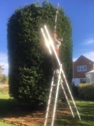 Main photos of Fourseasons Tree and Garden Care