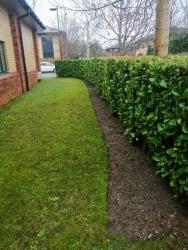 Hedge Trimming & Weeding