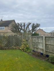 Main photos of Tree & Garden Designs
