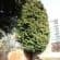 Tree surgery Lead