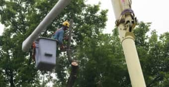 Request Tree surgery quote