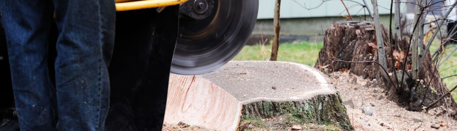 Request Stump grinding quote