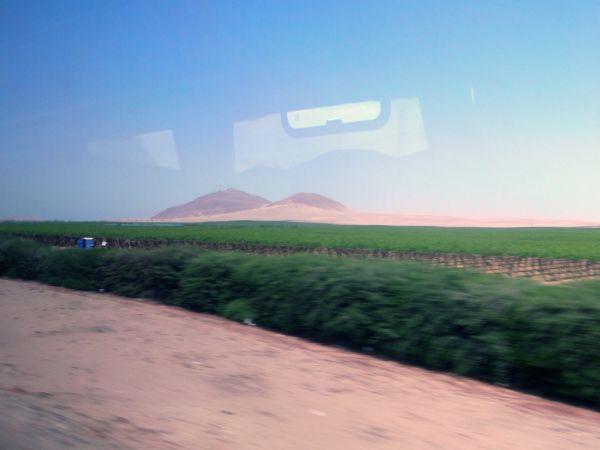 Vineyard on Pan-American Highway