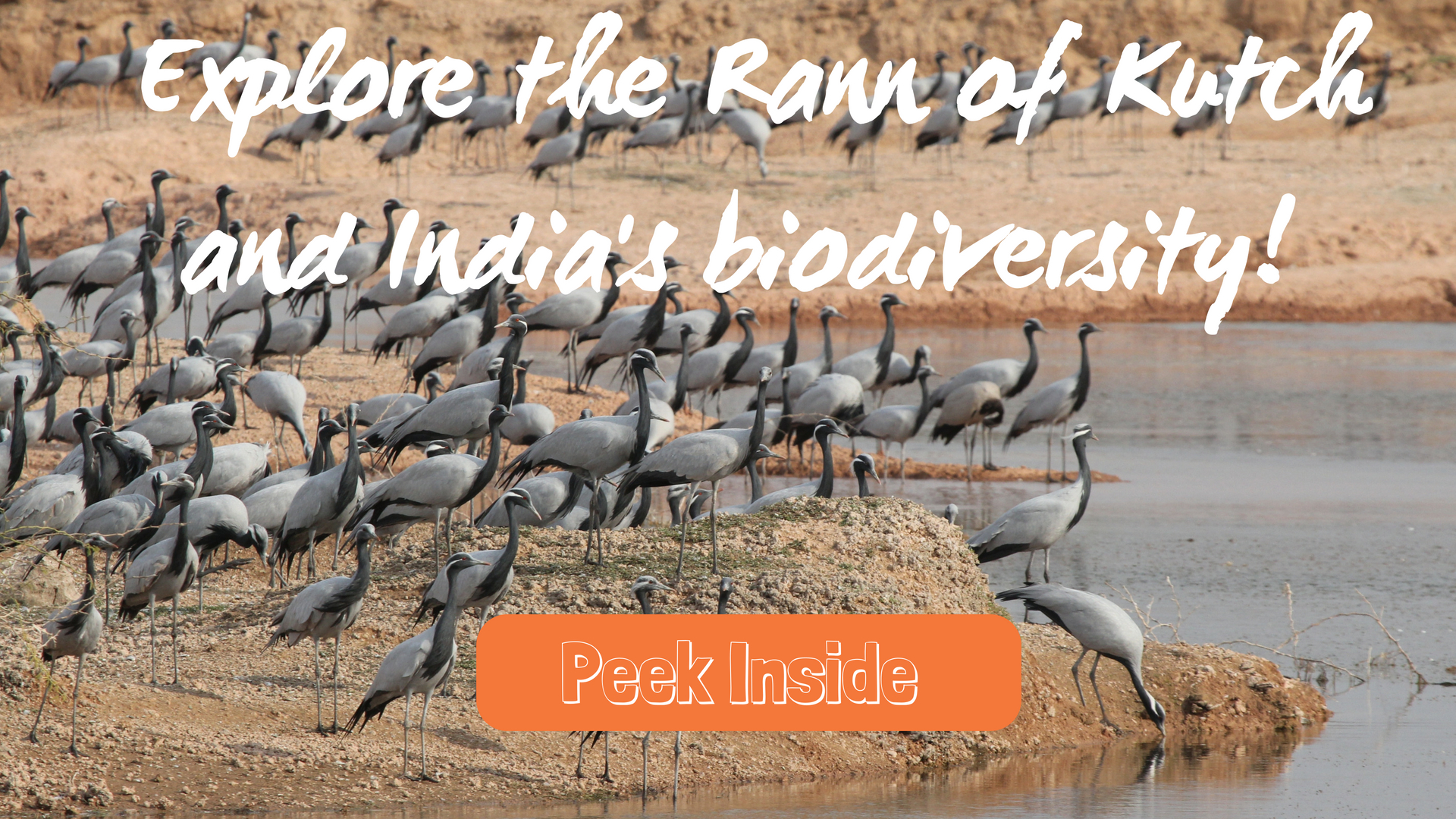Demoiselle Cranes, the Rann of Kutch and India's Biodiversity
