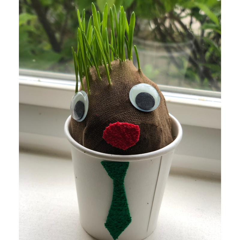 Grow a Grass Head this Spring!