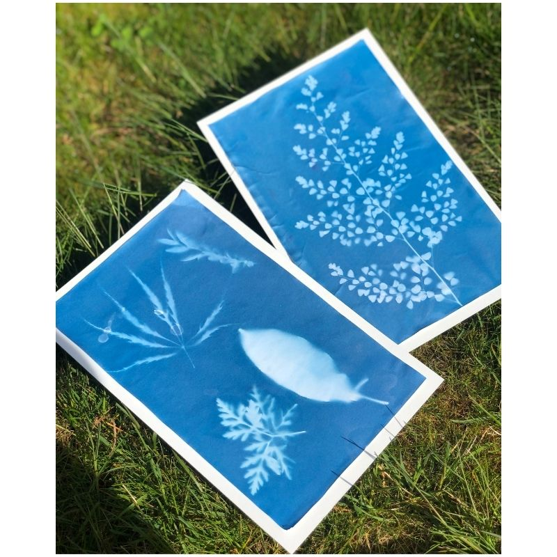 Nature Sun Prints for preschoolers
