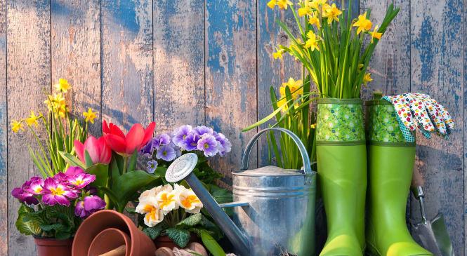 Want To Feel Happy? Start Gardening