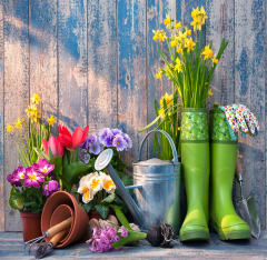 Want To Feel Happy? Start Gardening Image