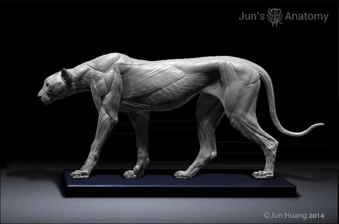 Big Cats: Artist Anatomy Models | Indiegogo