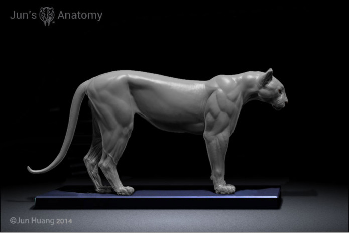 Big Cats: Artist Anatomy Models | Indiegogo