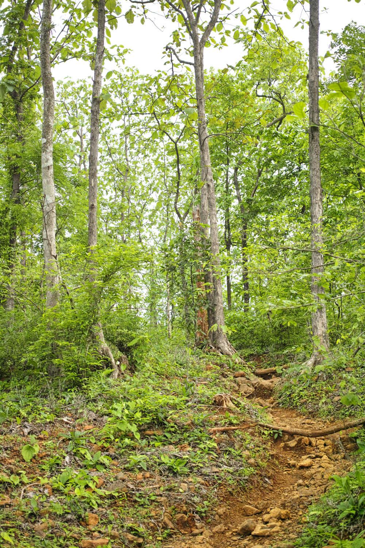Trail to Karnala fort