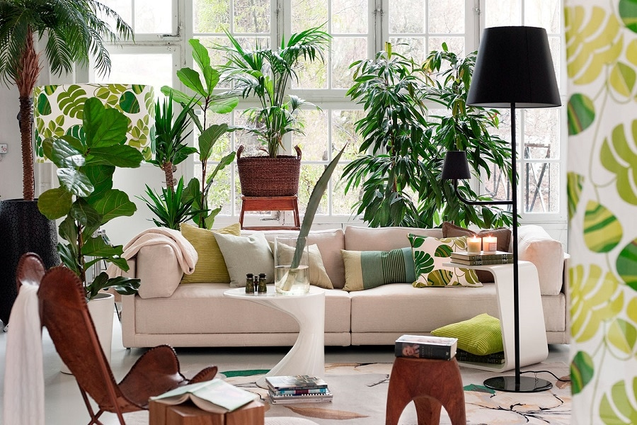 Aesthetic Indoor Plants to Destress at Home (with Easy Care Tips)