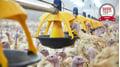 Titan: Neue XL-Futterschale für Truten