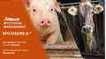 Mycosorb A + in vivo bei Schweinen, Geflügel und Wiederkäuer
