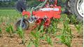 Grasuntersaat im Mais mit dem Güttler Harroflex Striegel