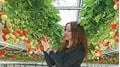 YaraTera: Spezialdünger für Beerenobst