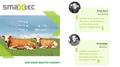 smaXtec für mehr Tierwohl und Gesundheit