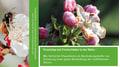 Ertragssicherung mithilfe von Mauerbienen im Obstbau