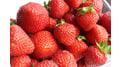 Süsse Erdbeeren aus dem Hofladen