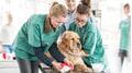 Tiermed. Praxisassistent/in EFZ - der Beruf in der Tierarztpraxis mit Tieren und Menschen