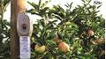 CheckMate® Puffer ® CM gegen Apfelwickler - in neuem Design